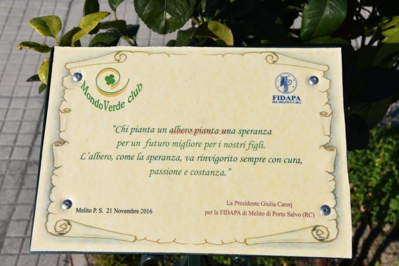 2 Mondo Verde 345