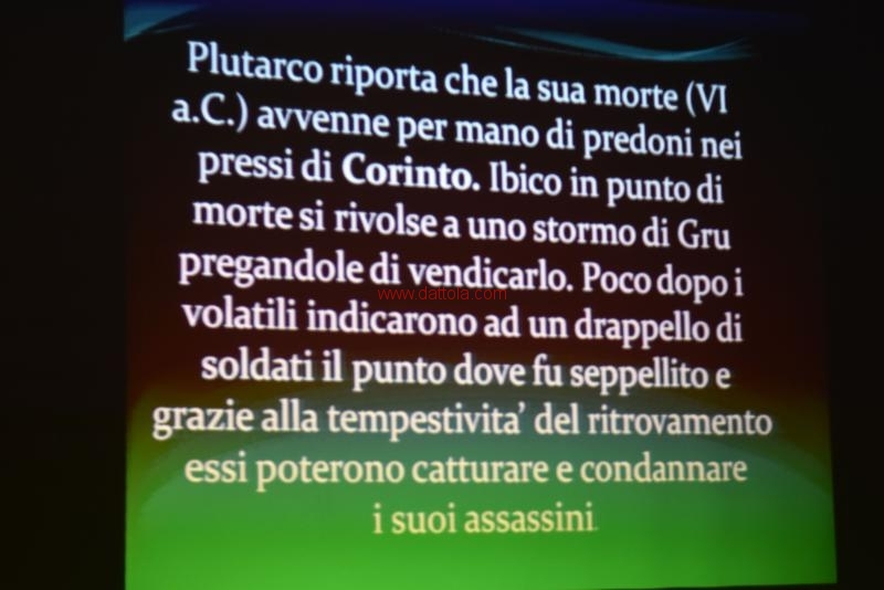 Cis Ibico074