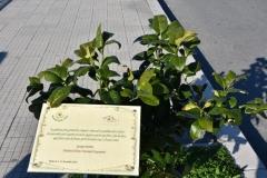 1 Mondo Verde019
