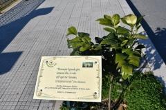 1 Mondo Verde025
