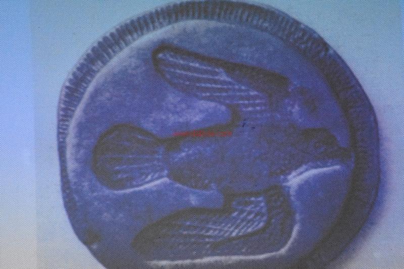 monete Castrizio117