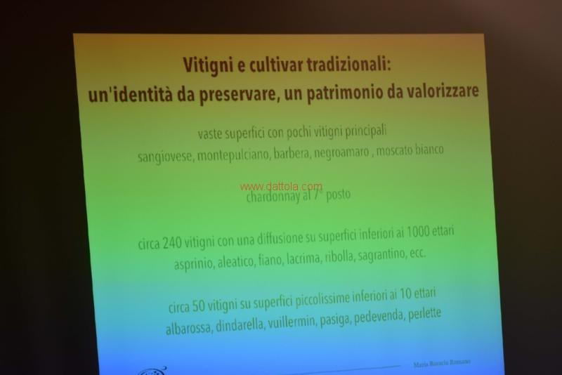 Vini Museo157