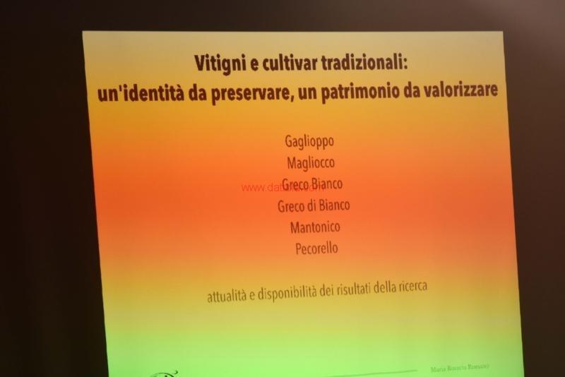Vini Museo158