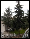 Immagine 042 alberi