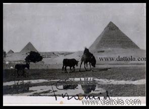 faraonicopy_thumb4