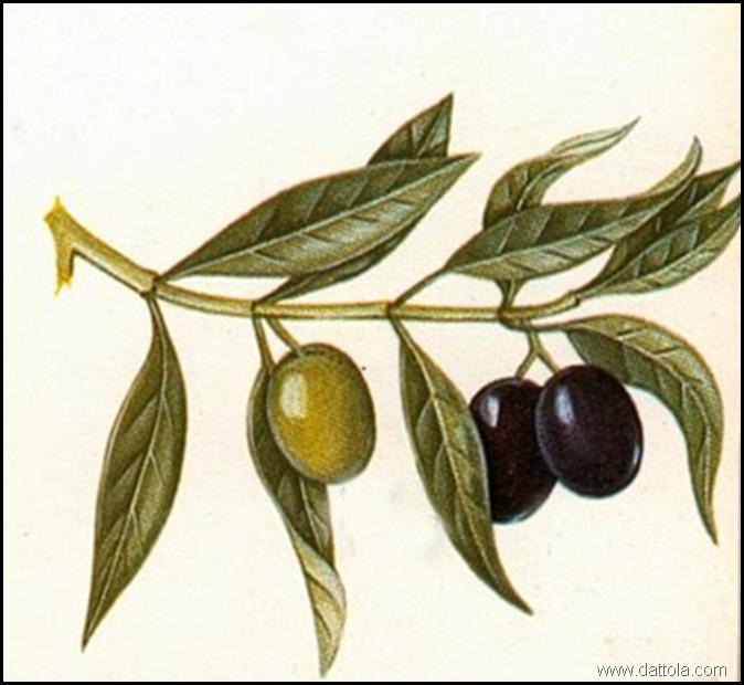 frutti non maturi e maturi