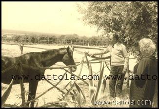 7 MAGGIO 1961 CAVALLI  CON SANTO_800x545 copy